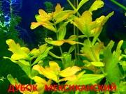 Дубок мексиканский и др растения ----- НАБОРЫ растений для запуска-