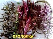 Могу собрать набор растений - для запуска или перезапуска акваса- -