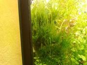 Мох стринг и др. растения -- НАБОРЫ растений для запуска--------