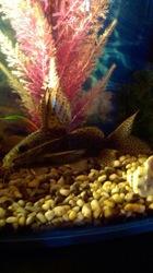Куплю растения шелковые для аквариума